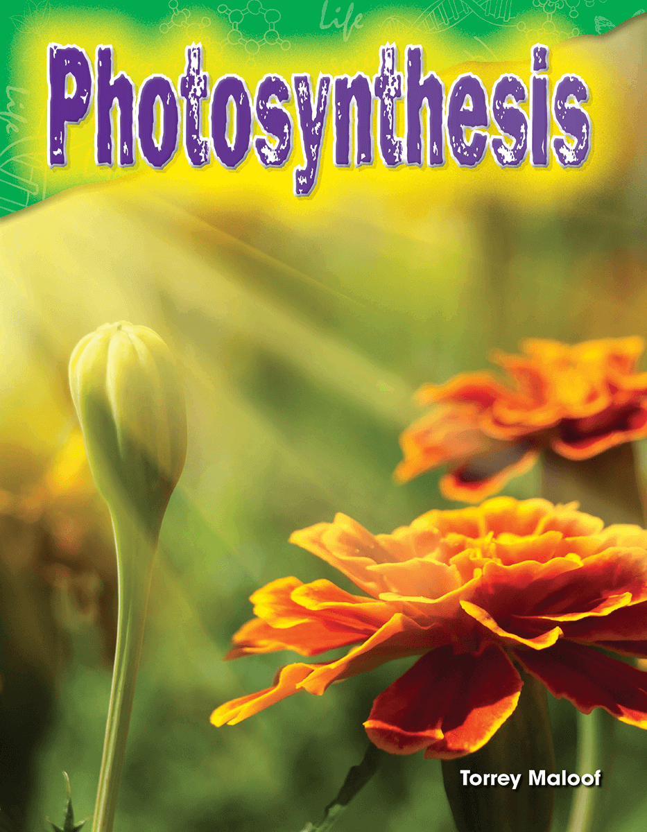 5ht grade books about photosysthesis Plants perform photosynthesis, using energy from the sun to make their own food the sugar made by this process is the main source of food for many animals because plants are the main producers of food for animals, photosynthesis is an important process to all life on earth.