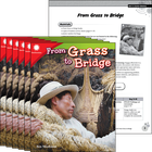 From Grass to Bridge 6-Pack